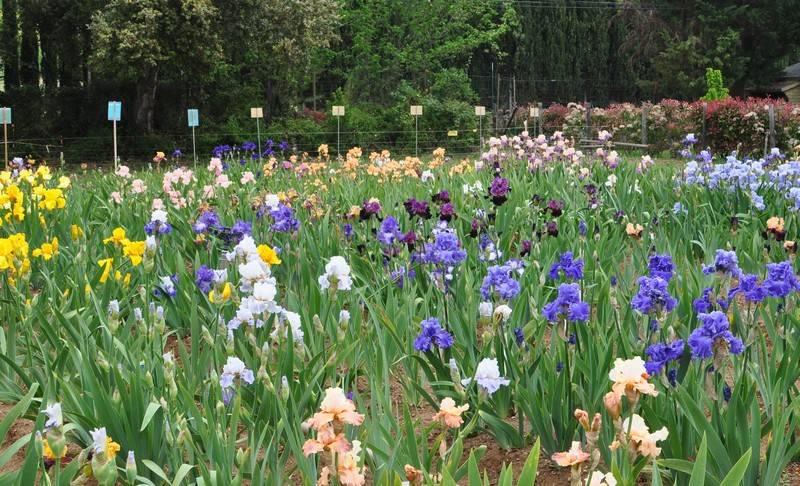 Visites du jardin d 39 iris fleuri iris en provence for Piscine iris jardin