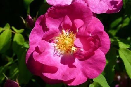 De la couleur des fleurs jardin botanique de saverne col de saverne 67700 saverne 67 - Jardin botanique de saverne ...
