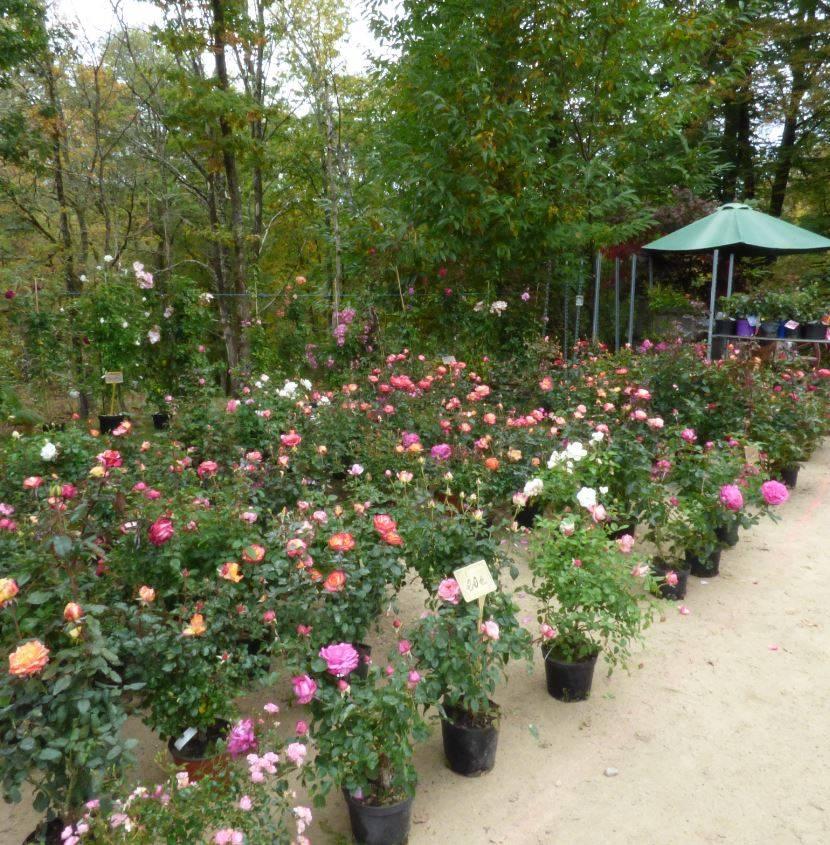f te des plantes et de l 39 artisanat au jardin du pr en bulle jardin du pr en bulle. Black Bedroom Furniture Sets. Home Design Ideas