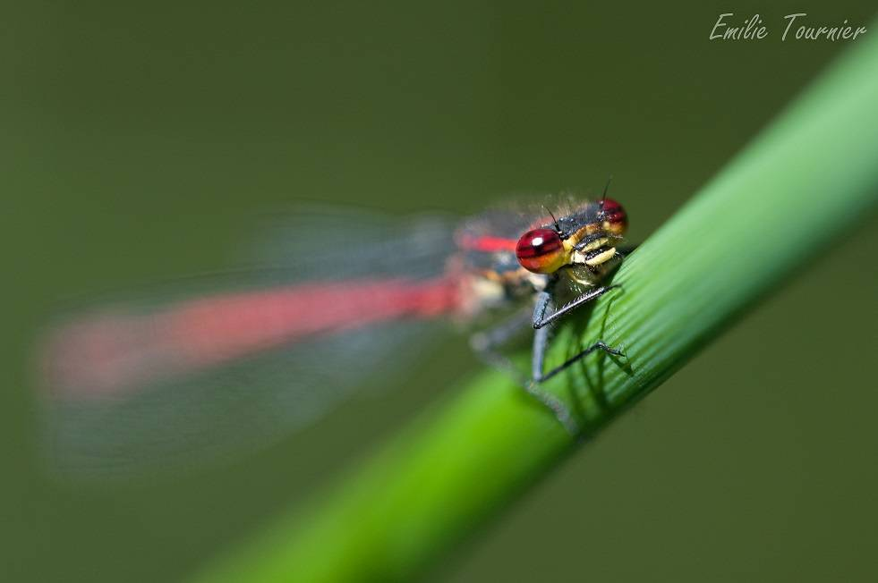 "Stage macro-photo ""Les insectes"" - Courson-Monteloup"