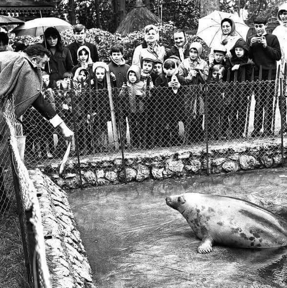 Visite Les Animaux Du Jardin Botanique Toute Une Histoire