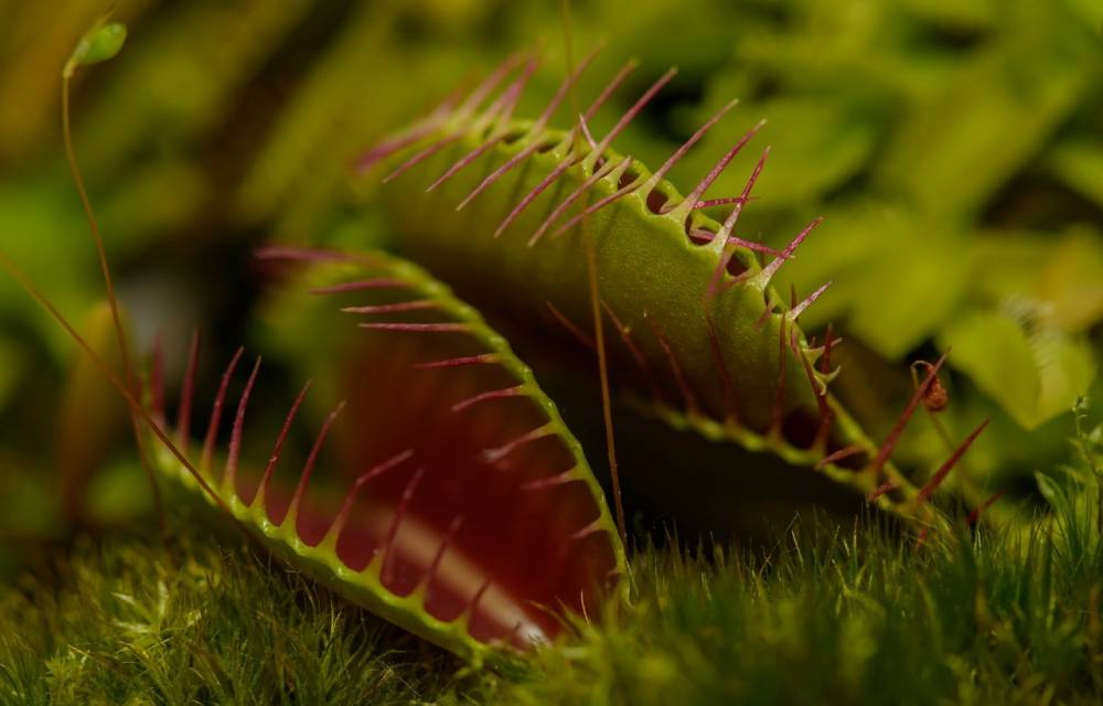 "Green weekend: ""Mysterious carnivorous plants"". - Vascoeuil"