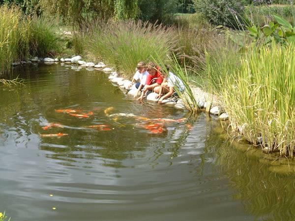 Les jardins aquatiques photo 9 for Jardin aquatique