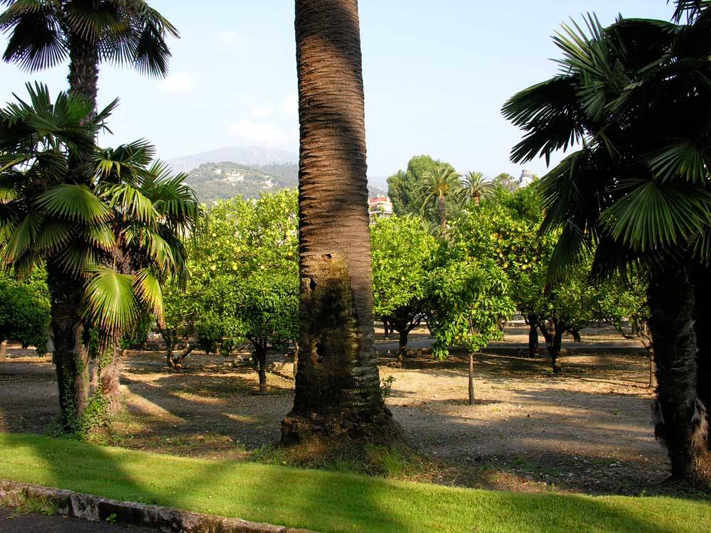 Jardin du Palais Carnolès photo 10