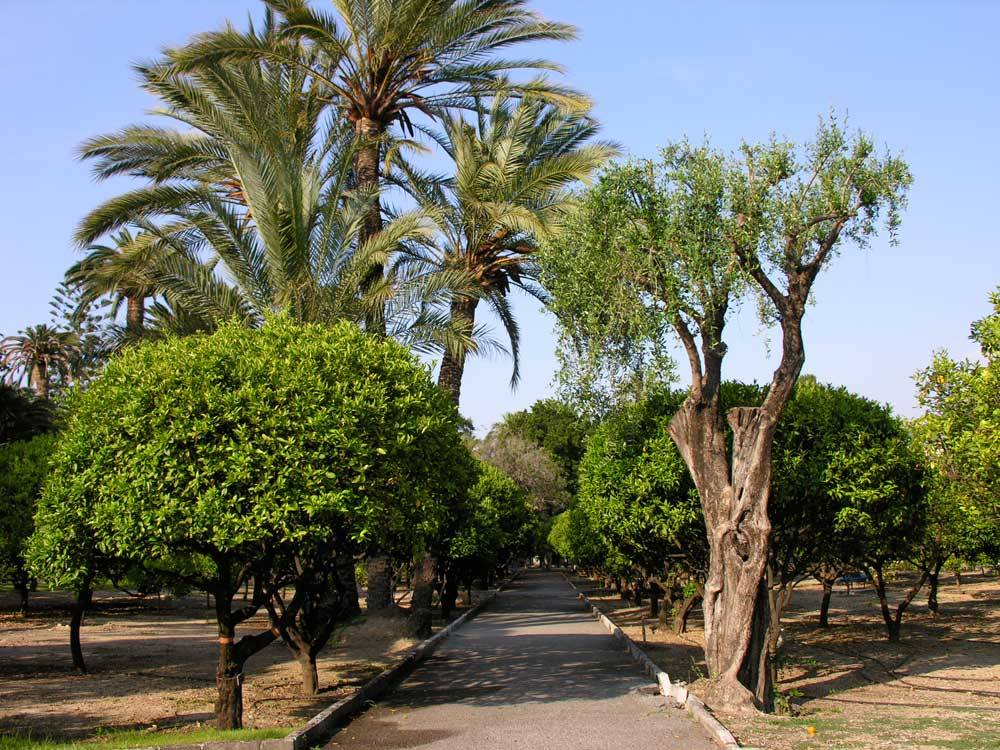 Jardin du Palais Carnolès photo 12