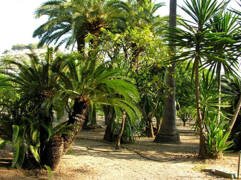 Jardin du Palais Carnolès photo 9