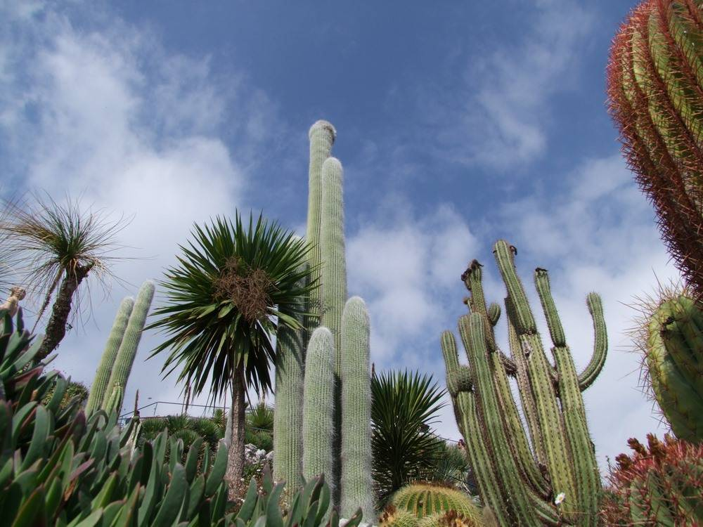 Exotic Garden Of Eze photo 4
