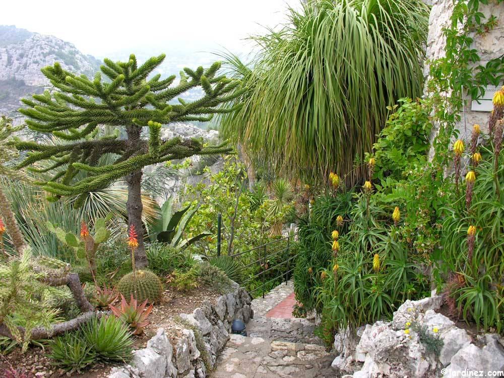 Jardin exotique d 39 eze photo 8 - Jardin exotique d eze ...