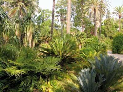 jardin botanique de la villa thuret antibes juan les