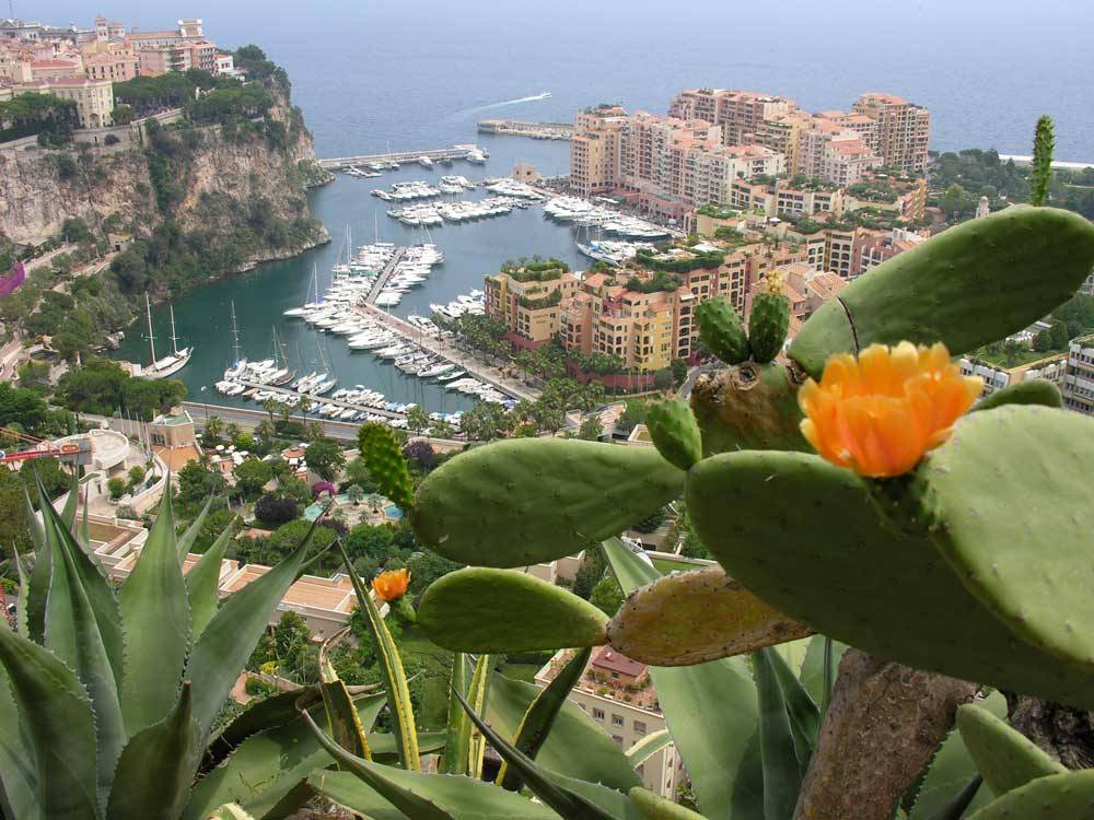 Jardin Exotique de Monaco photo 0