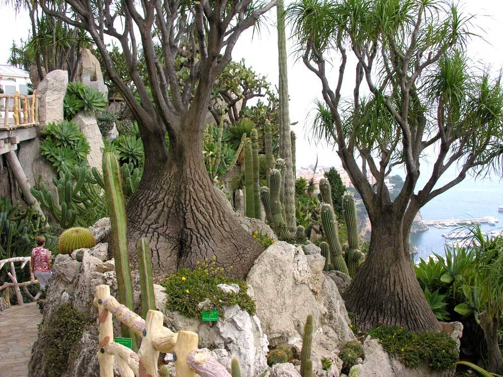 Jardin Exotique de Monaco photo 10