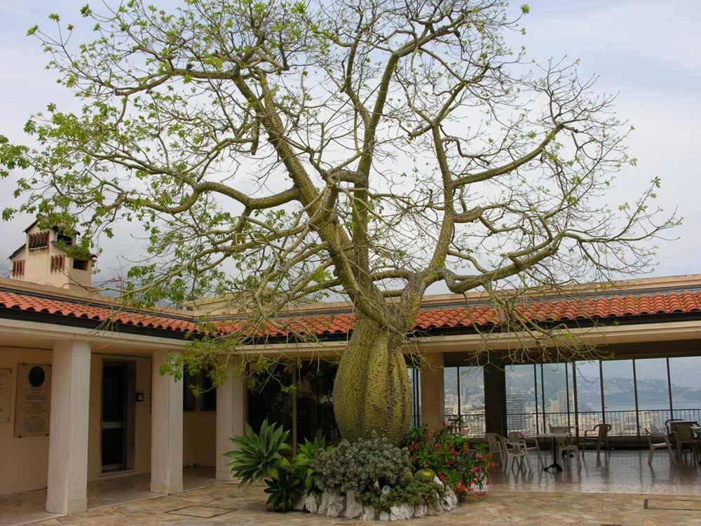 Jardin exotique de monaco photo 12 - Photo jardin exotique ...