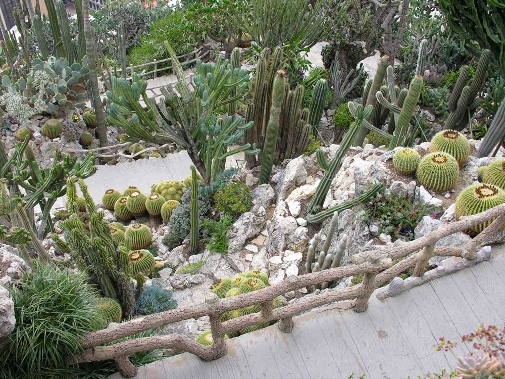 Jardin Exotique de Monaco photo 2