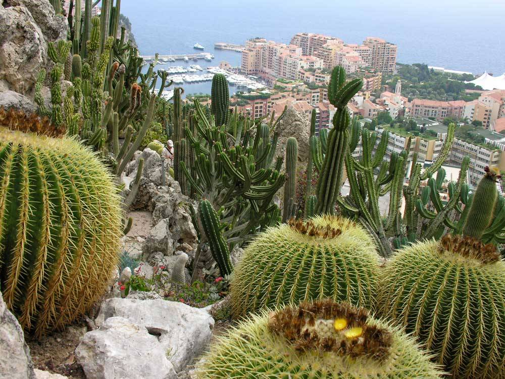 Jardin Exotique de Monaco photo 3