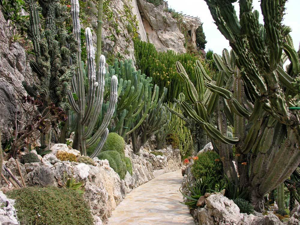 Jardin Exotique de Monaco photo 4