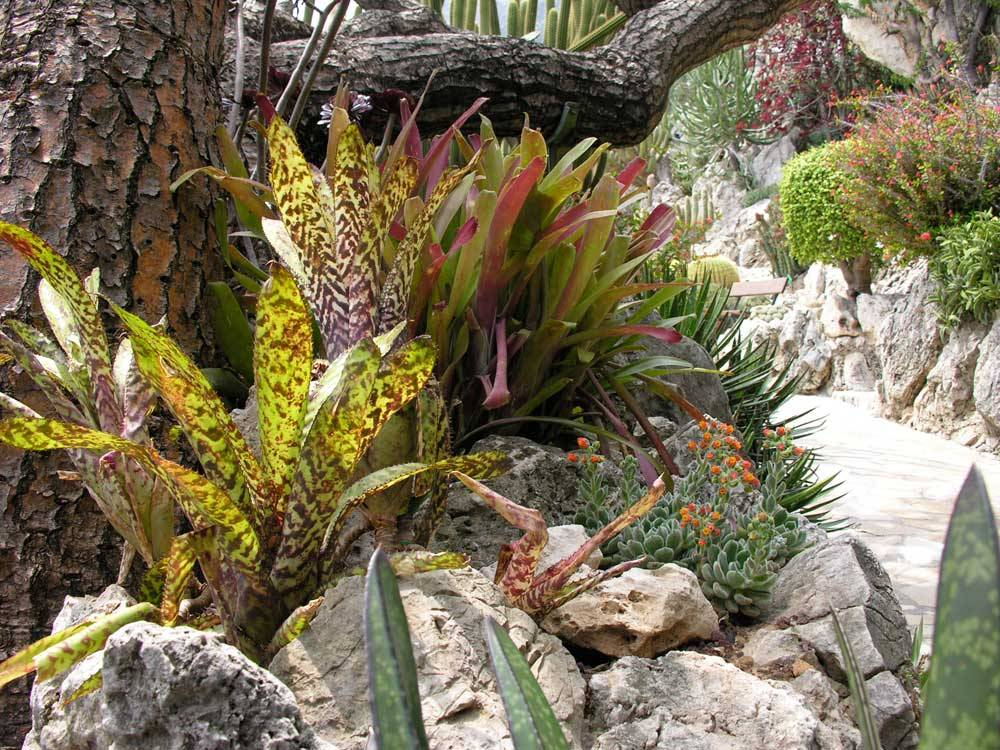 Jardin Exotique de Monaco photo 8
