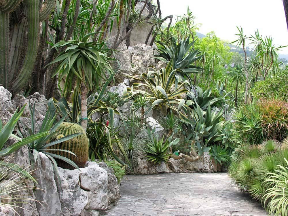 Jardin exotique de monaco photo 9 for Boulevard du jardin exotique