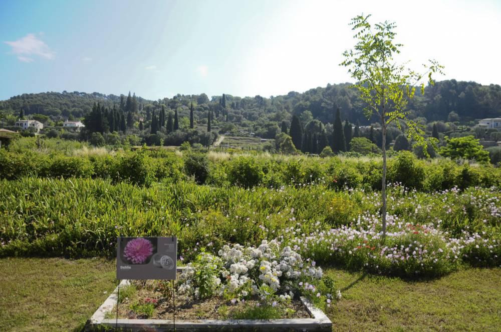 Les jardins du mus e international de la parfumerie photo 5 for Garage du park mouans sartoux