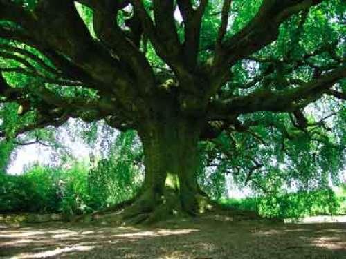 Le jardin public de bayeux 2 6 ha prolong d 39 une avenue for Entretien jardin bayeux