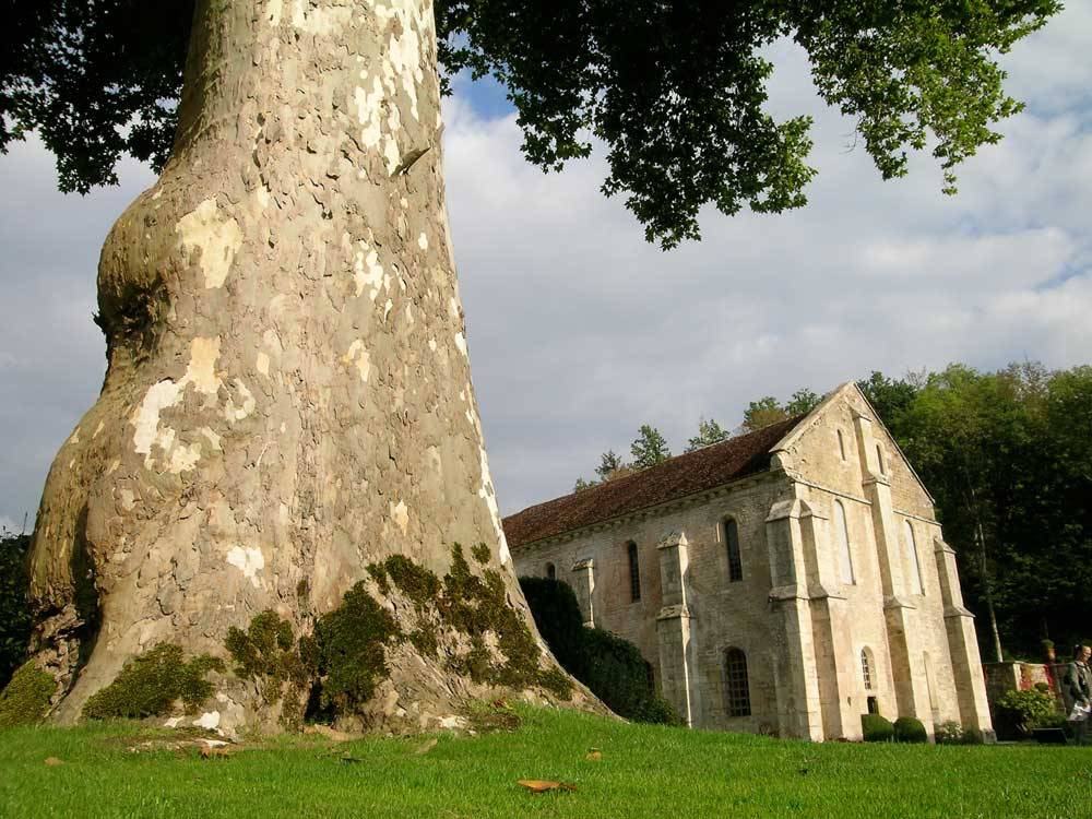 Gardens Of Fontenay Abbey photo 1