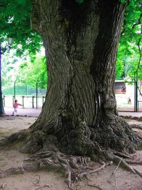 Jardin public de mont limar photo 4 for Store et jardin montelimar