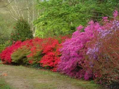 Tourisme en bretagne les parcs et jardins - Jardin botanique de cornouaille ...