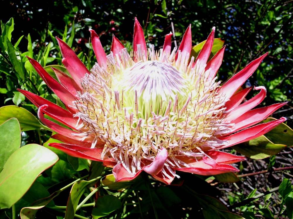 Jardin exotique et botanique de roscoff photo 1 - Jardin exotique roscoff tourcoing ...