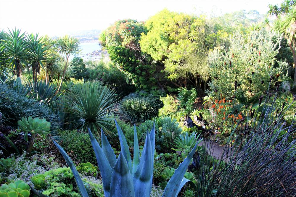 Roscoff Exotic and Botanic Garden photo 3