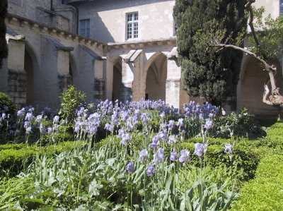 Les jardins de la chartreuse photo 0 for Entretien jardin villeneuve les avignon