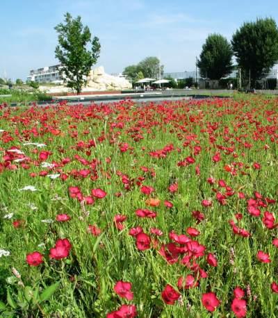 Jardin botanique de bordeaux photo 3 for Jardin botanique bordeaux