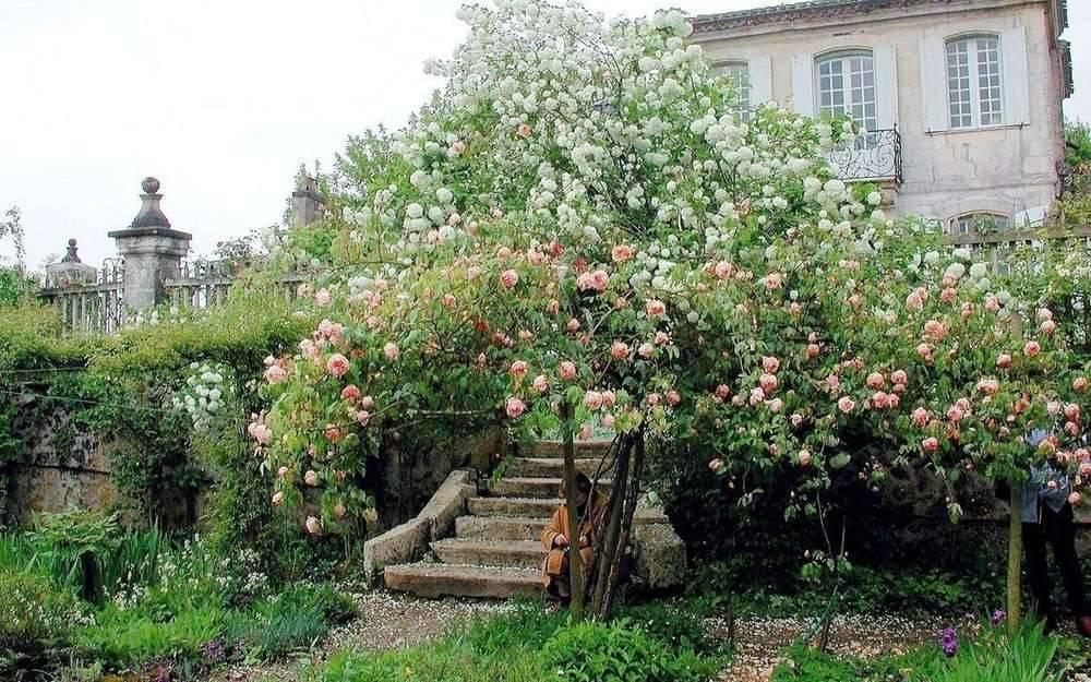 Jardin du Château de Mongenan photo 0