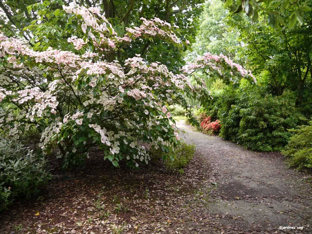 The Jean Huchet Arboretum photo 12