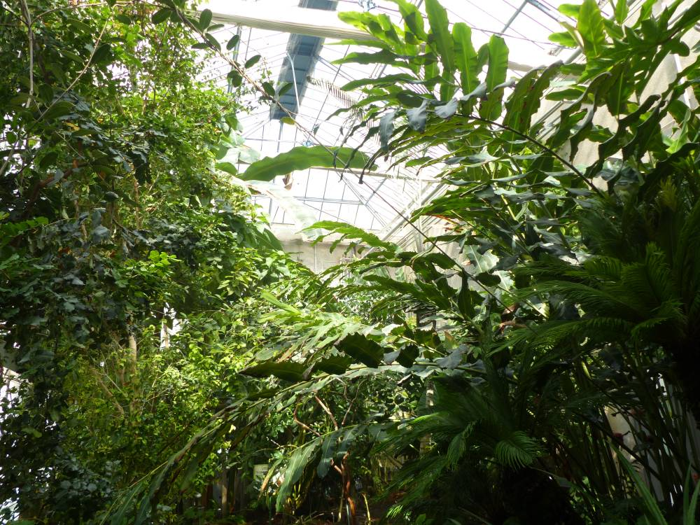 Botanical Garden Of Tours photo 3
