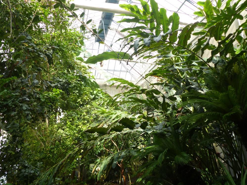 jardin botanique de tours photo 3 - Jardin Botanique De Tours