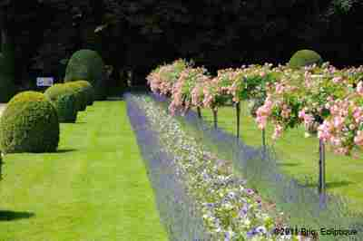 The Gardens Of Chenonceau Castle photo 9