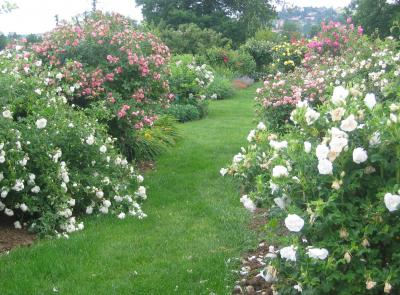 The Rose Garden Of Saint-Galmier photo 0