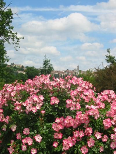 The Rose Garden Of Saint-Galmier photo 12