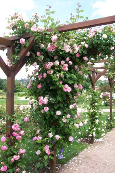The Rose Garden Of Saint-Galmier photo 6