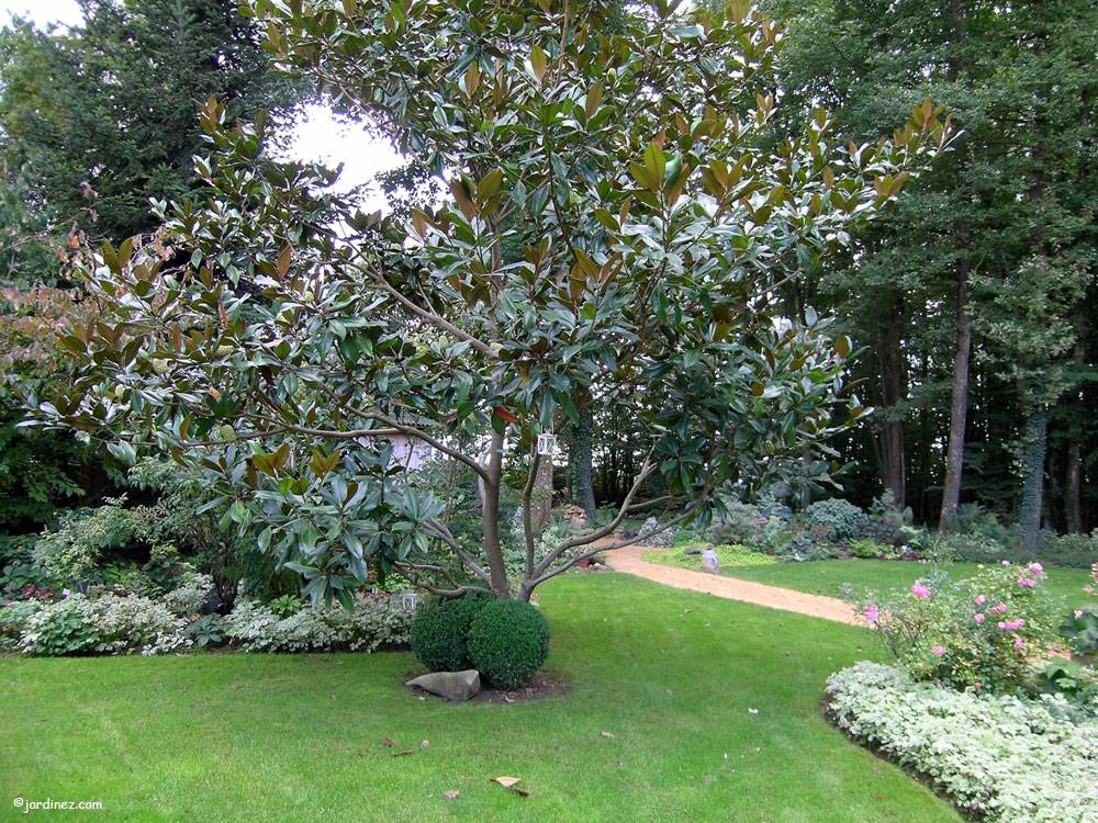 Jardin des Dentelles photo 0