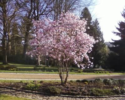 Jardin botanique de la perrine photo 2 for Entretien jardin laval 53