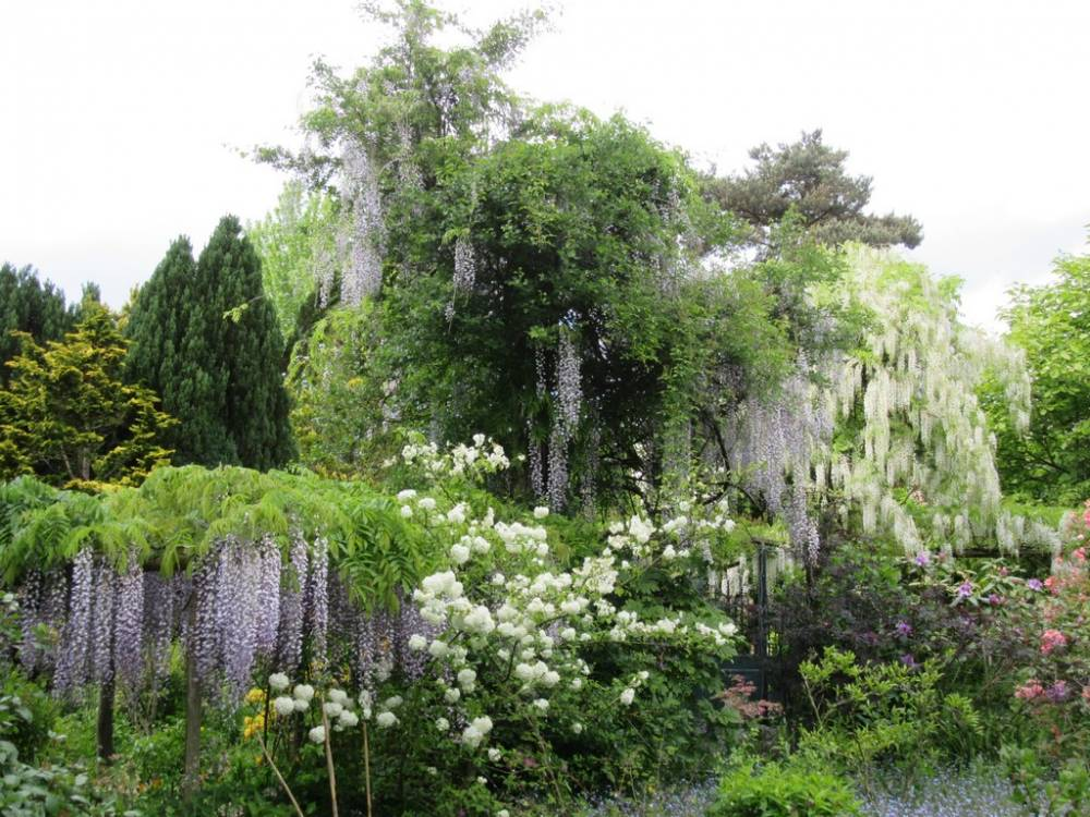 Botanical Garden Of La Petite Rochelle photo 8