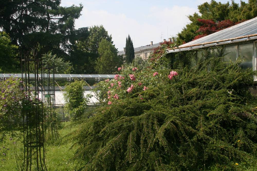 jardin botanique de l 39 universit photo 1. Black Bedroom Furniture Sets. Home Design Ideas