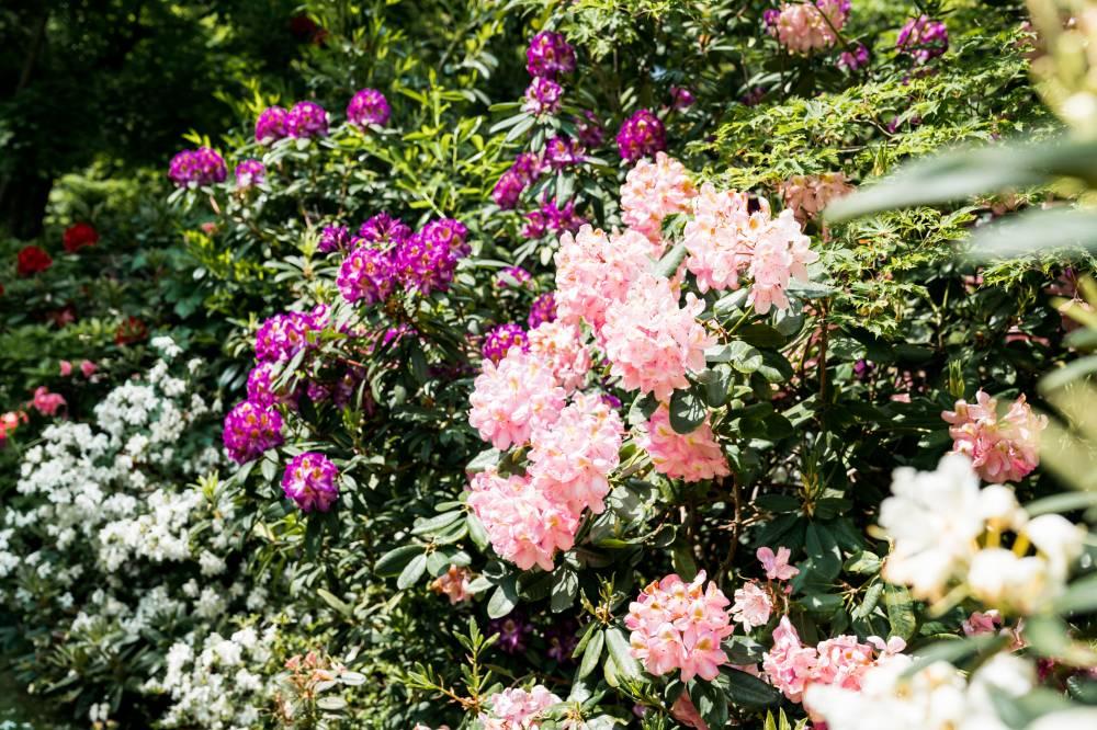 Parc zoologique et botanique photo 10 - Terrasse et jardin haut rhin mulhouse ...