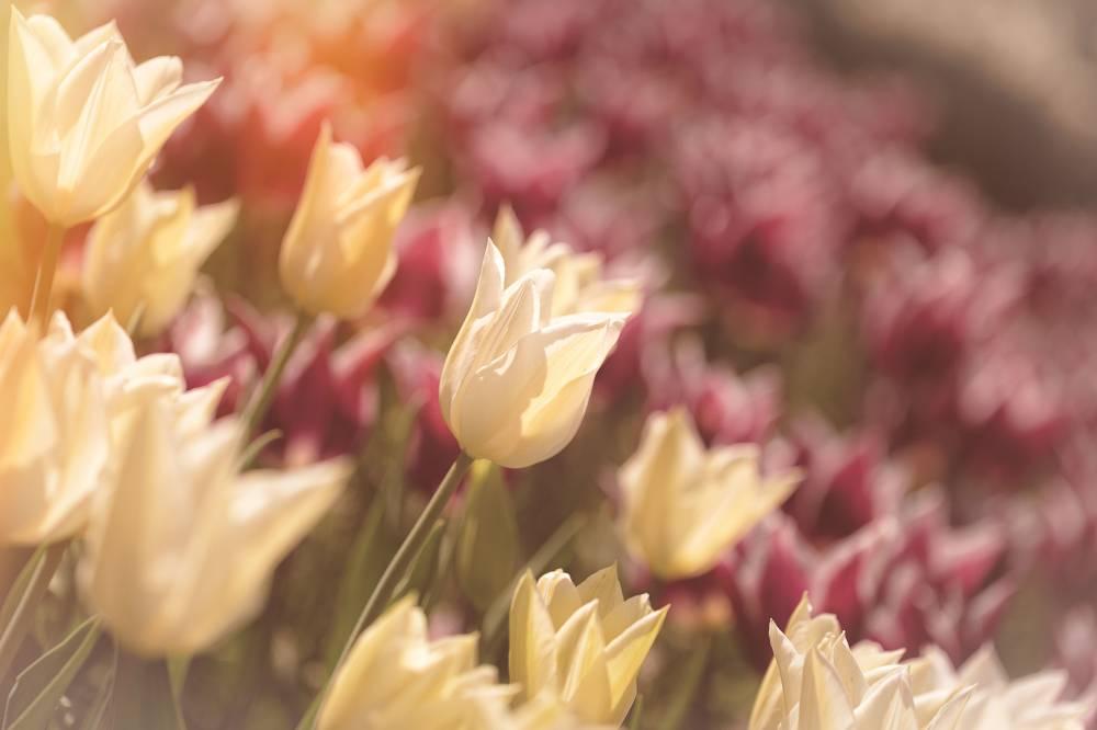 Parc zoologique et botanique photo 3 for Entretien jardin haut rhin