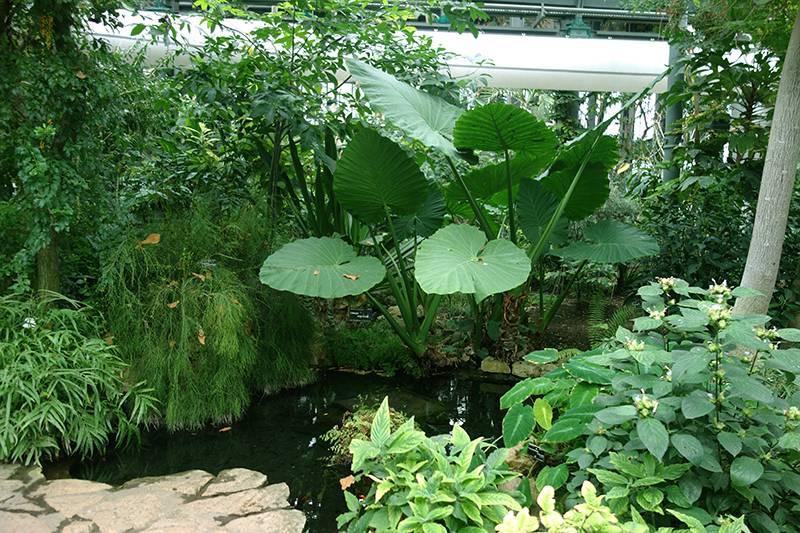Jardin botanique de lyon photo 2 for Jardin botanique lyon