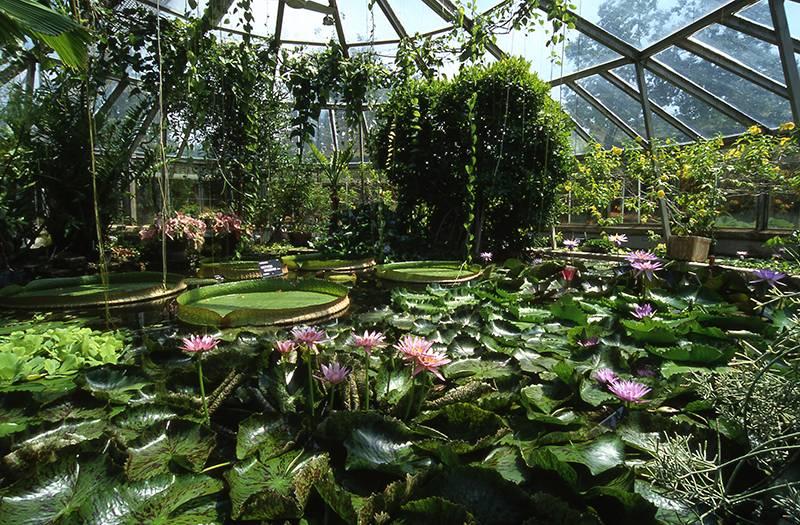Jardin botanique de lyon photo 9 - Jardin botanique de lyon ...