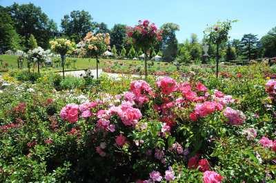 Jardin des plantes de le mans photo 2 for Entretien jardin le mans