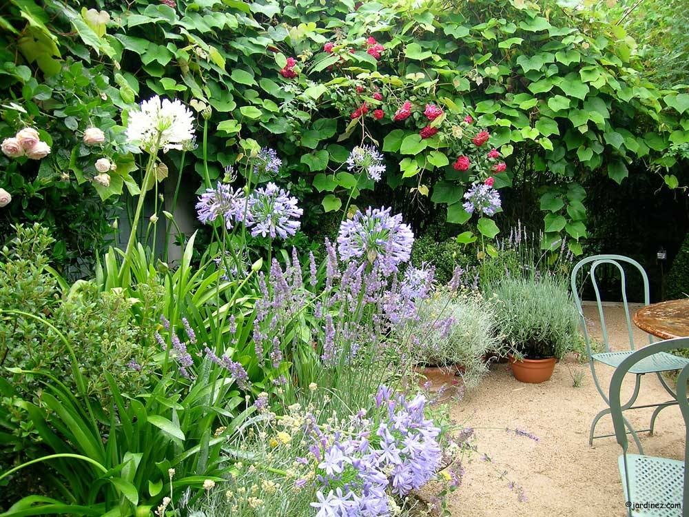 Jardin Agapanthe photo 0
