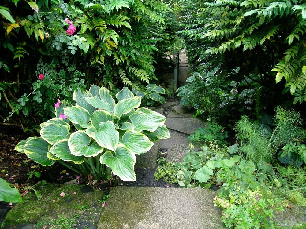 Jardin Agapanthe photo 2