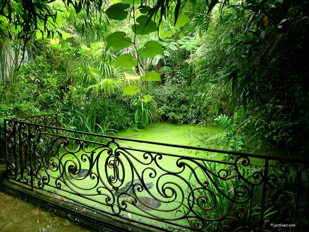 Jardin Agapanthe photo 3